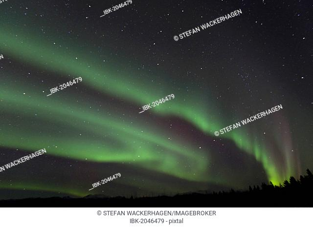 Swirling northern polar lights, Aurora borealis, green, near Whitehorse, Yukon Territory, Canada, America