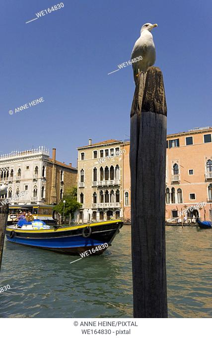 seagull at canale grande in venice