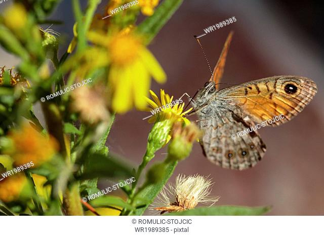 Butterfly on flower, close-up