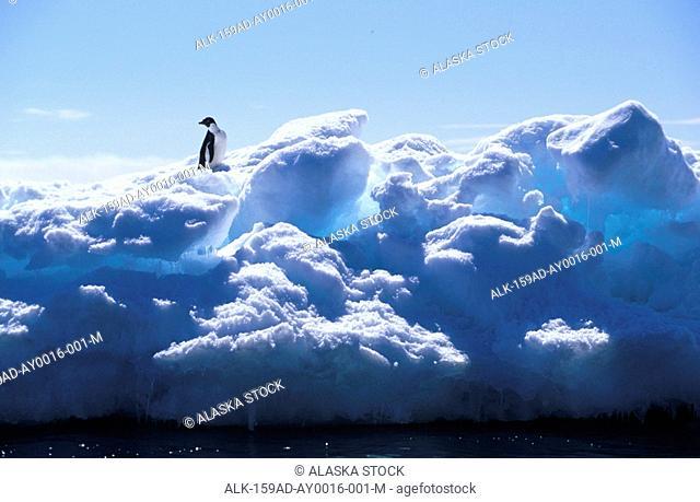 Adelie Penguin Standing on Iceberg Antarctica