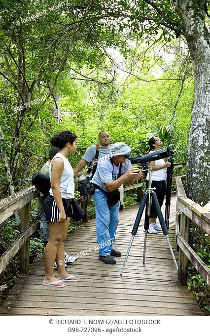 Big Cypress Bend Boardwalk, bird watching in Everglades National Park, Florida