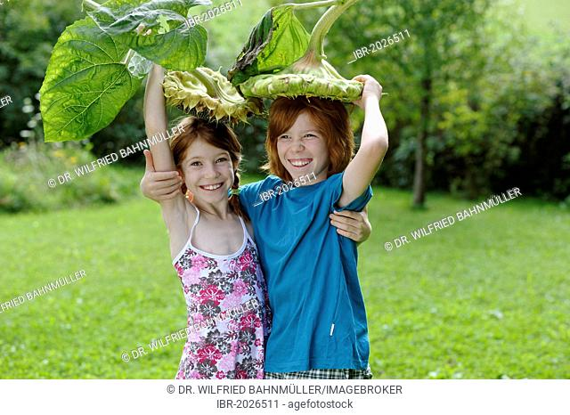 Girl and boy with large sunflowers as hats