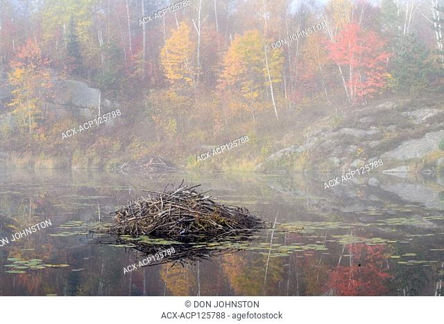 Autumn reflections in a foggy beaver pond, Greater Sudbury, Ontario, Canada
