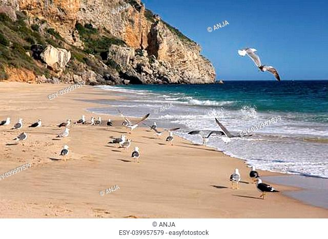 cliff and seagulls in Sesimbra, Portugal