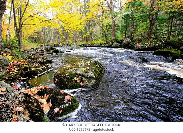 an autumn scene on a stream in the Adirondack mountains of New York USA