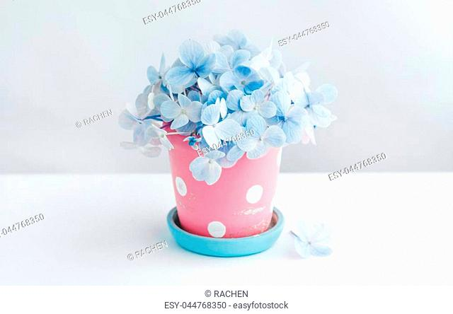 flower In the cute pot White background