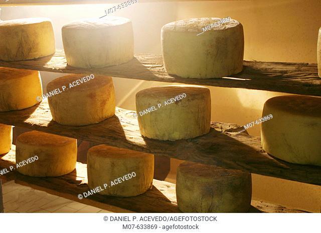 Cheese drying