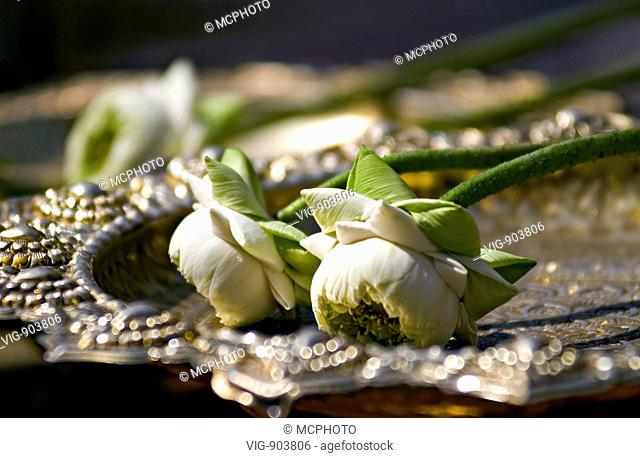 This stock photo shows a closeup of two white Lotus Flowers used as buddhist offer on a silver and golden metal plate. The image was taken on a sunny morning