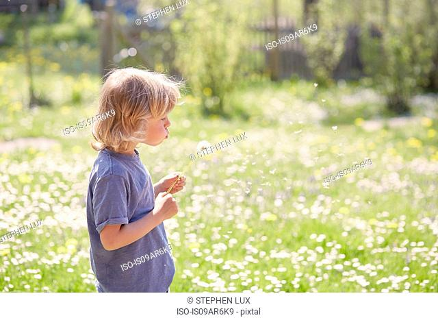 Young boy outdoors, blowing dandelion