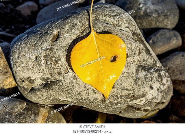 Yellow leaf on stone