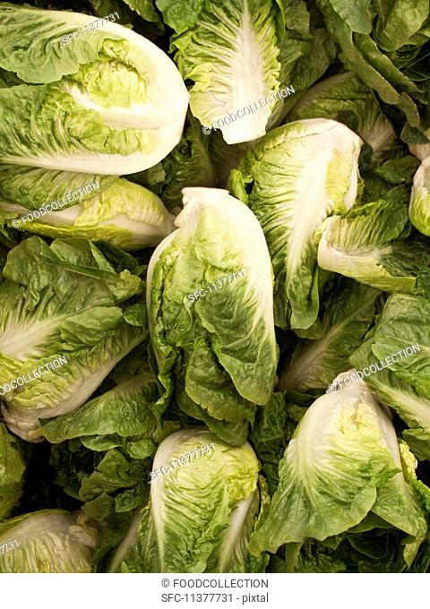 Cos lettuce (full frame)