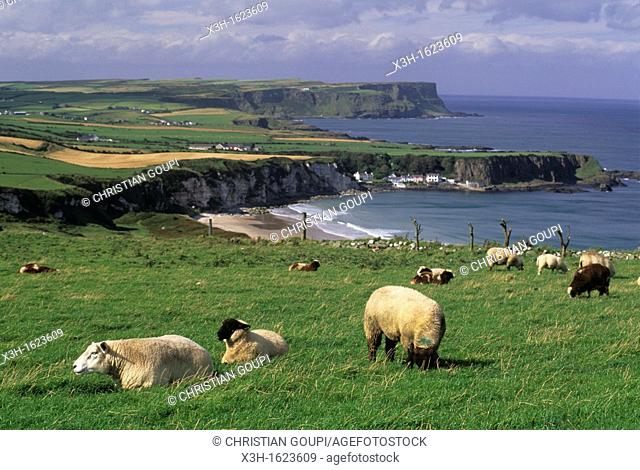 White Park Bay coast, County Antrim, Northern Ireland, United Kingdom, Western Europe