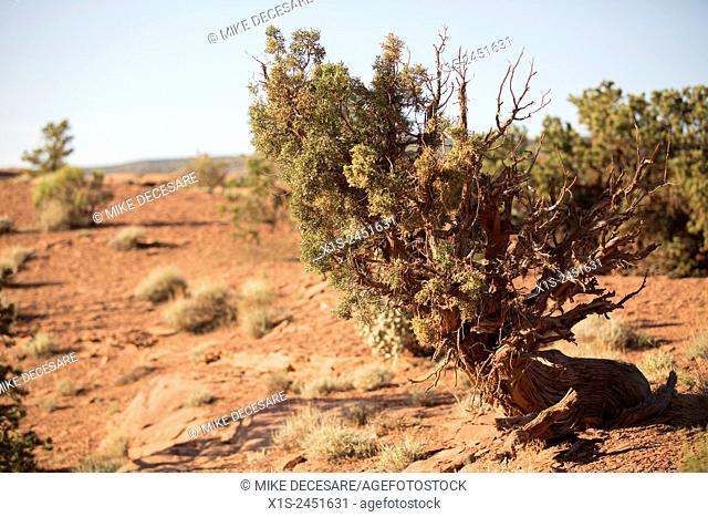 Green desert sage against rust sandstone colors in Utah