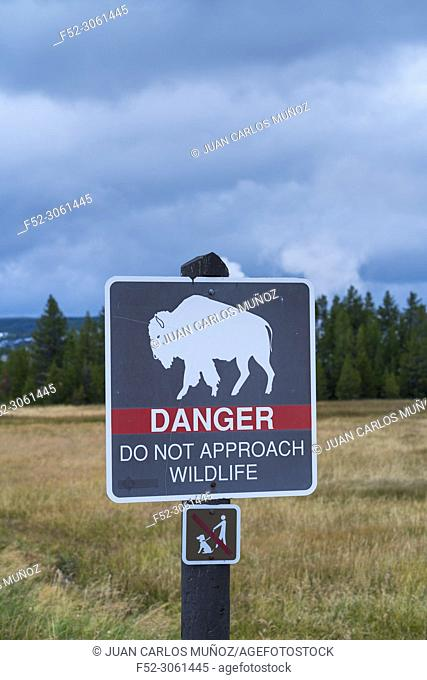 Dangerous wildlife, Yellowstone National Park, Unesco World Heritage Site, Wyoming, Usa, America