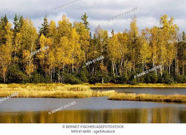Moor lake, swimming islands, National Park Sumava, raised moss, Chalupska Slat, birch wood, colours of autumn, Czech Republic