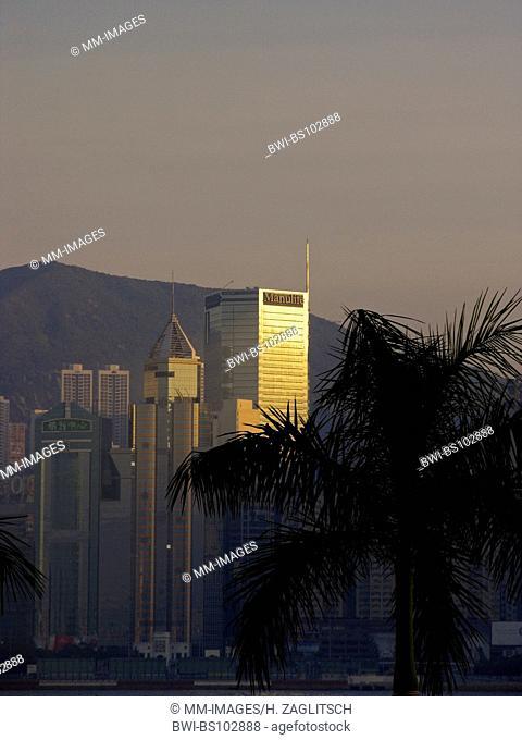 skyline of Hongkongs Central District with palm tree, China, Hong Kong