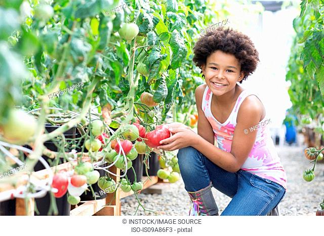 Girl picking fresh tomatoes