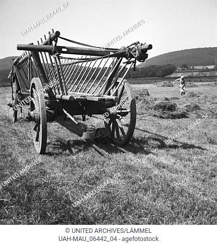 Einbringen der Heuernte, Deutschland 1930er Jahre. Harvesting hay, Germany 1930s