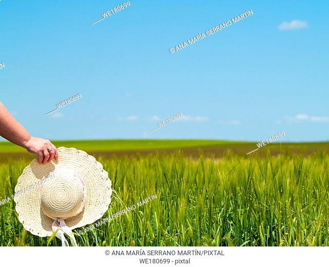 Unrecognizable with a straw hat in his hand in a farm field in spring barley person