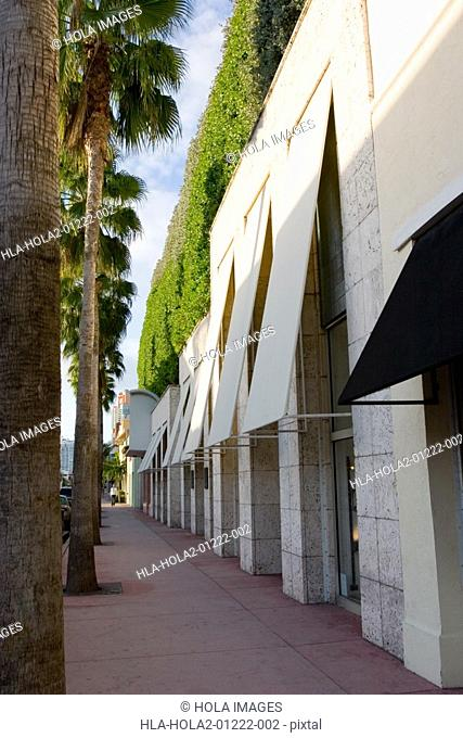 Palm trees along a building near miami beach