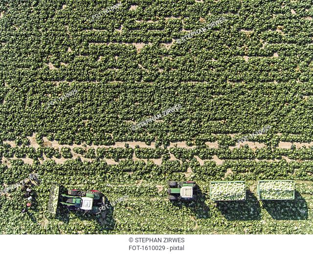 Directly above view of tractors and trailers of cabbage in field, St. Poelten, Austria