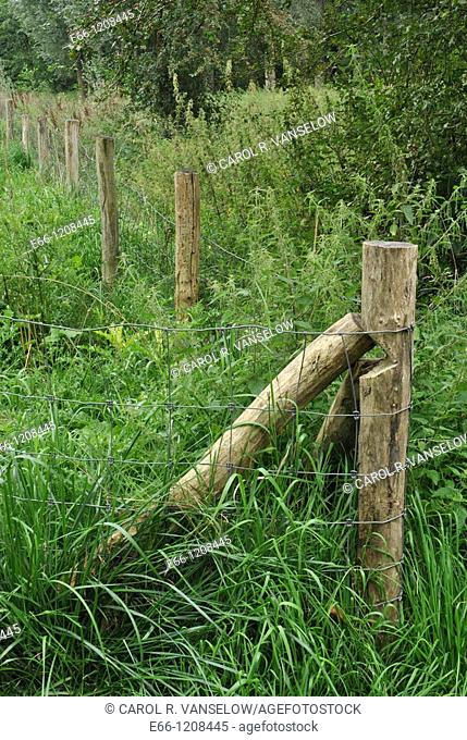 corner of a fence showing the wooden fenceposts and the overgrown grasses Photo taken in Hoensbroek in the province of Limburg in the Netherlands