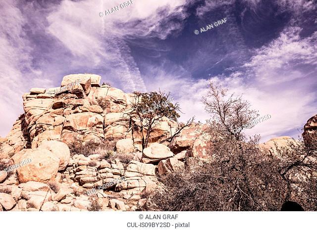 Rock formations and trees, Joshua Tree, California, USA