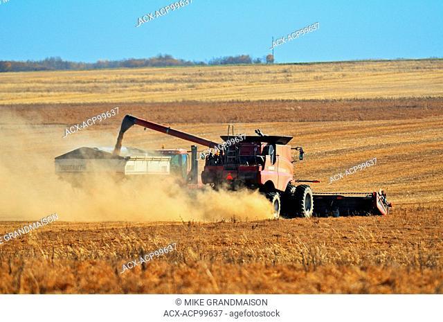 Unloading lentils in grain cart near Abermathy Saskatchewan Canada