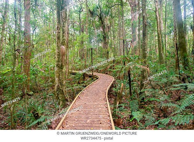 New Zealand, Northland, Kaihu, Trounson Kauri Park, hiking trail in the Touronson Kauri Park
