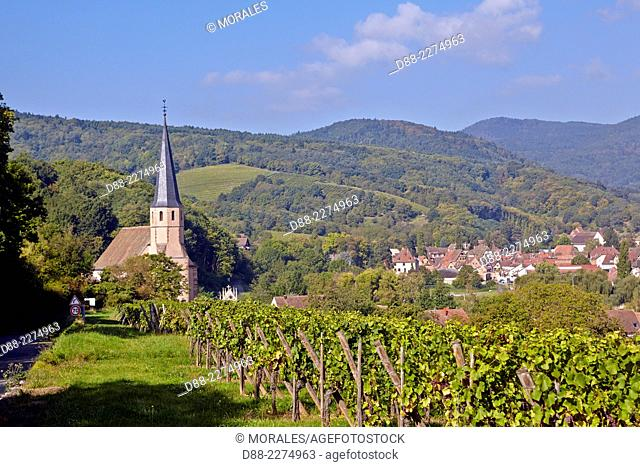 France,Alsace,Bas-Rhin (67),Wine Route,Andlau, St Andre Chapel and vineyard