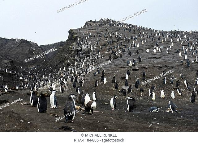 Penguins, Saunders Island, South Sandwich Islands, Antarctica, Polar Regions