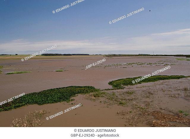 Flooded sandbank, Flood, Pântano Grande, Rio Grande do Sul, Brazil