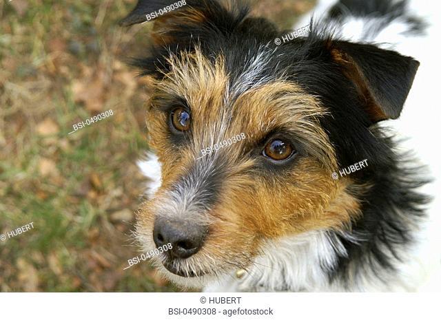 Microsporum Canis Dog