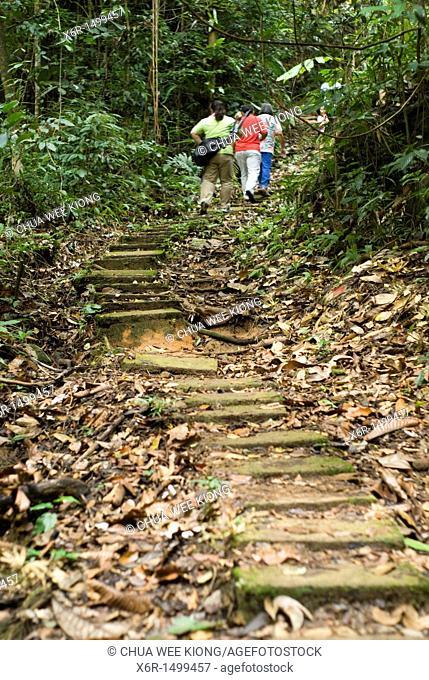 Jungle Trial of Gunung Garding Sarawak, Malysia
