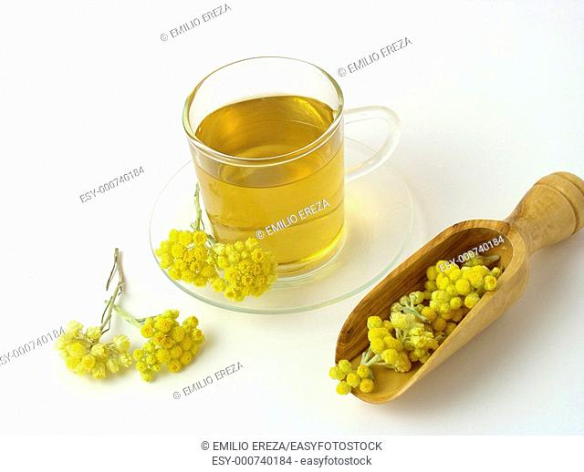 Curry plant infusion Helichrysum sp