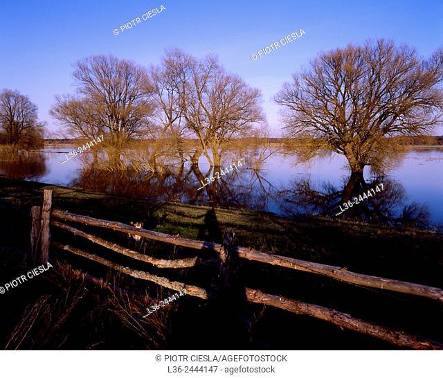 High water in spring, Bug River, Podlasie region, Poland