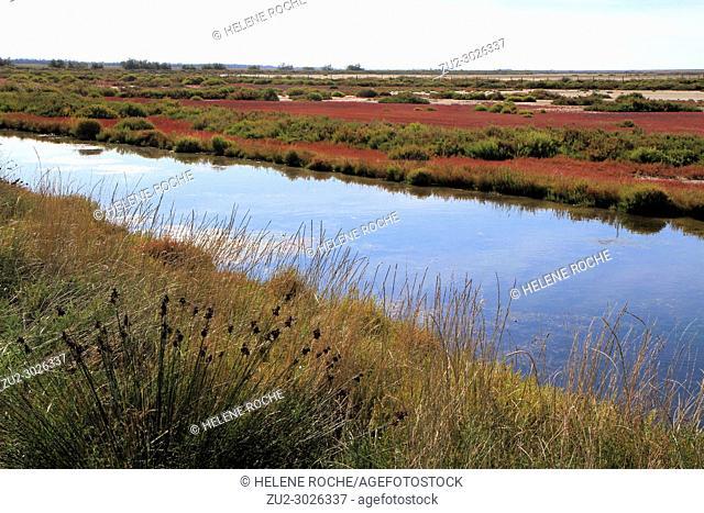 Landscape of Camargue, Provence, France