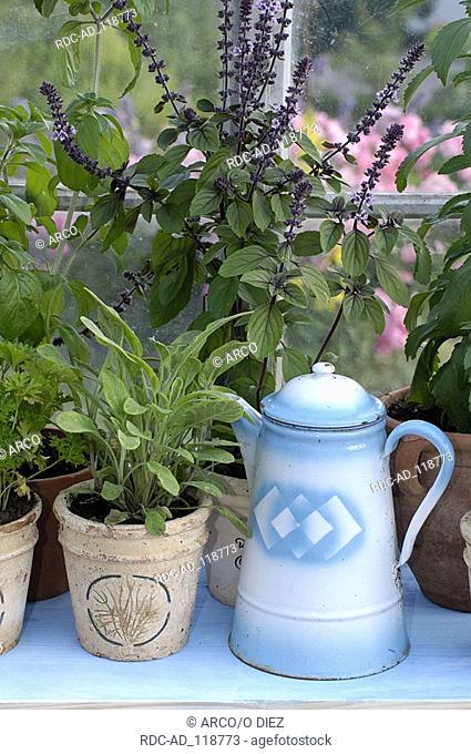 Several kinds of herbs on windowsill