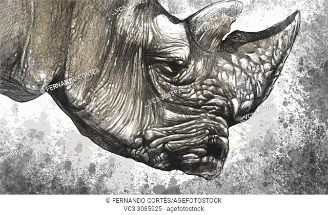White rhino (Ceratotherium simum) illustration made with digital tablet