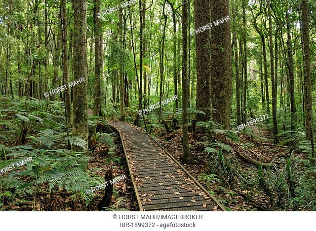 Boardwalk, Trounson Kauri Park north of Dargaville, North Island, New Zealand