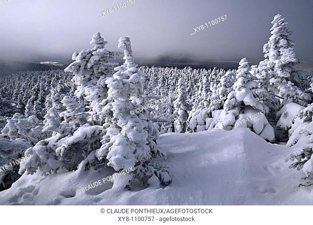 Snow-covered-trees, Mount-Mégantic-National-Park, Québec, Canada