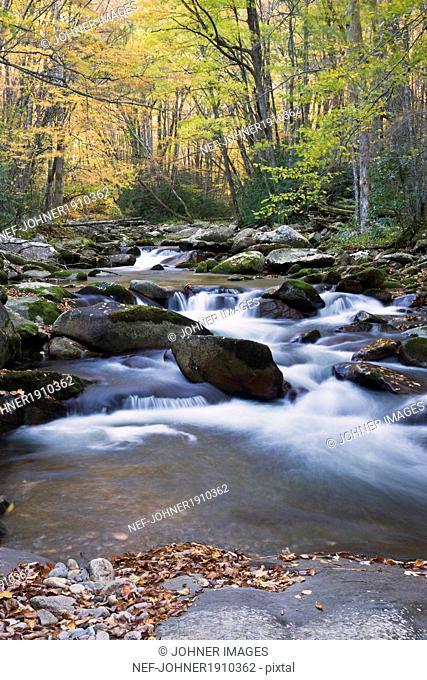 Flowering stream, Great Smoky Mountains national park, USA