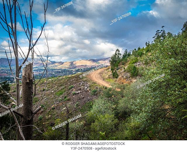 A gravel road curves around the side of a mountain slope. Recently cleared forestation. A cloudy but clear day. Cape Town, South AFrica
