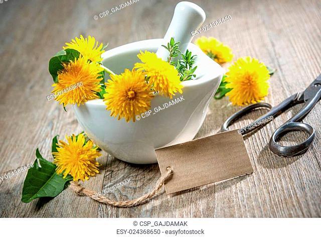 Healing herbs. Dandelion