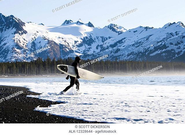 Surfer walking into the ocean along the Kenai Peninsula Outer Coast, South-central Alaska; Alaska, United States of America