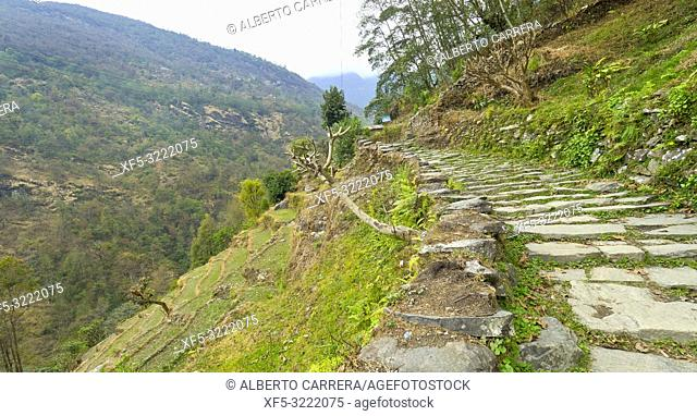 Mountain Footpath, Trek to Annapurna Base Camp, Annapurna Conservation Area, Himalaya, Nepal, Asia