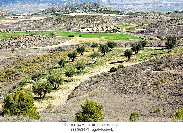 Campo en Villarrubia de Santiago. Provincia de Toledo. Spain