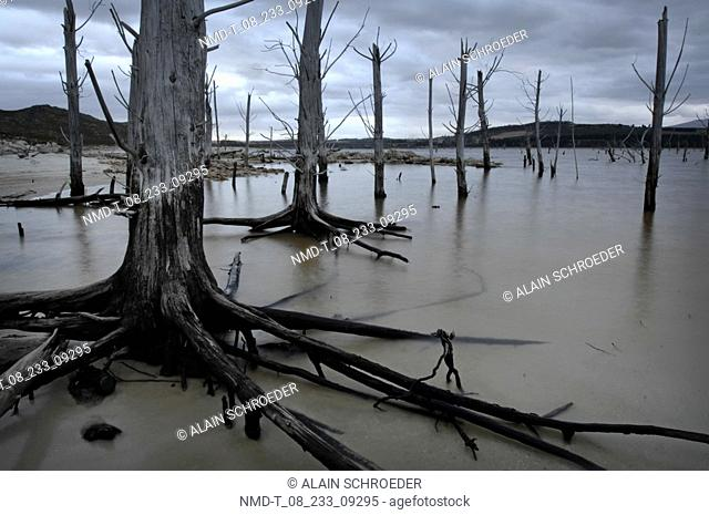 Dead trees in a lake, Theewaterskloof, Hottentots Holland Nature Reserve, Franschhoek Pass, Western Cape Province, South Africa