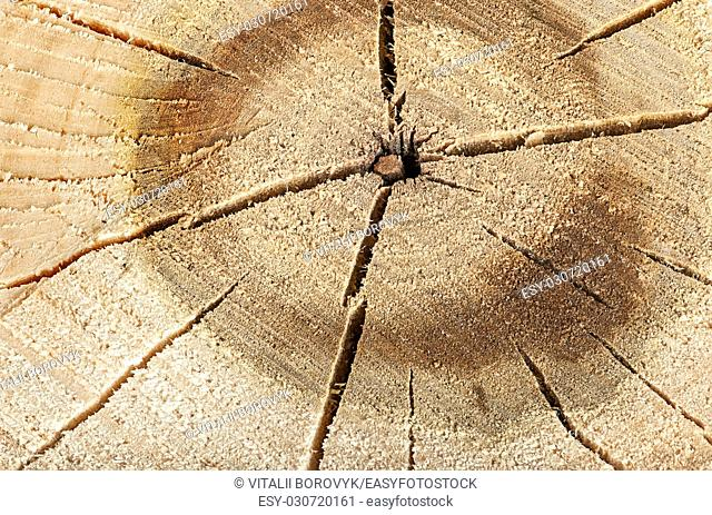 Abstract background poplar cut logs with cracks