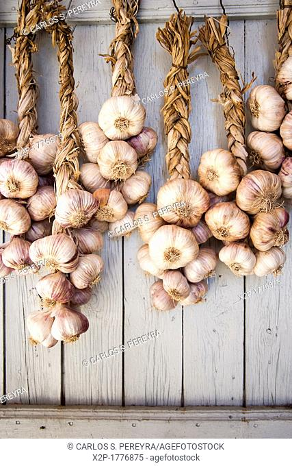 Garlics in Sault, Provence, France
